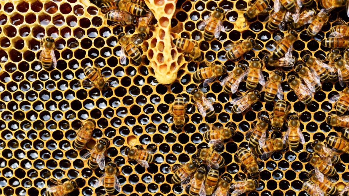 La coexistencia entre agricultores y apicultores aportará a la salud de las abejas