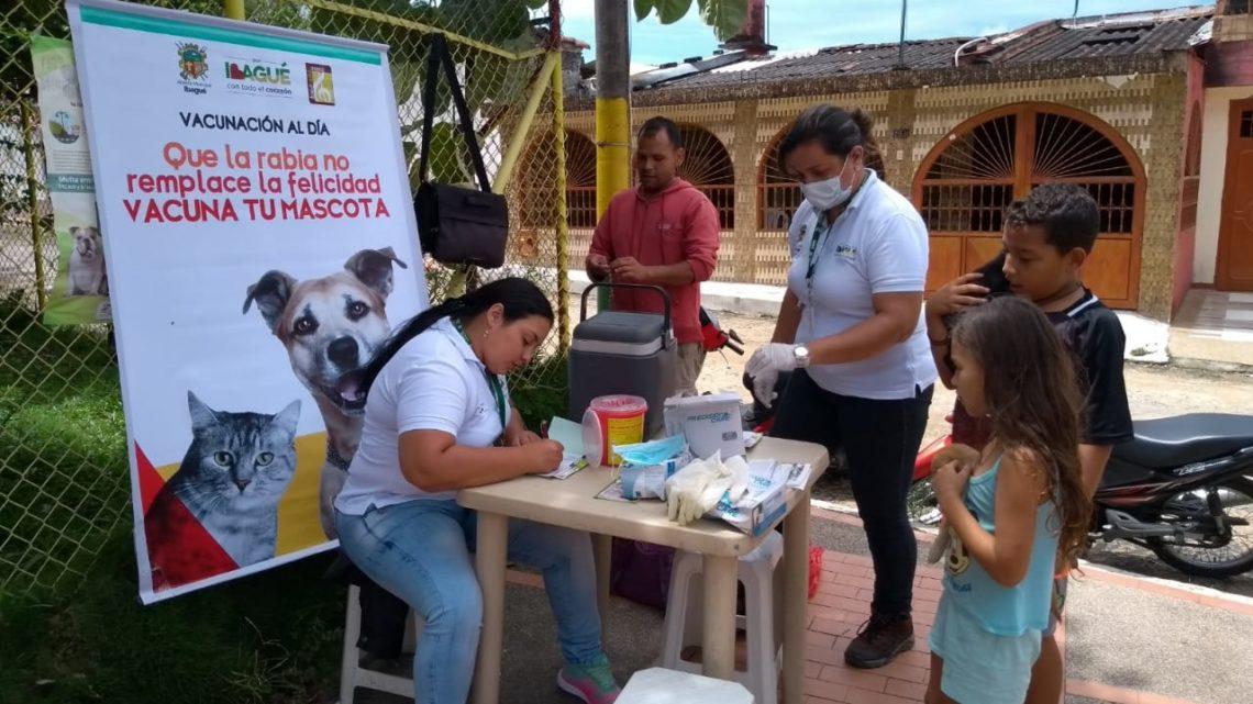Esta semana habrá 20 puntos de vacunación gratuita para mascotas en Ibagué-Tolima