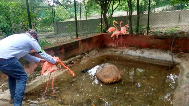 En libertad celebra la fauna silvestre el Día del Medio Ambiente