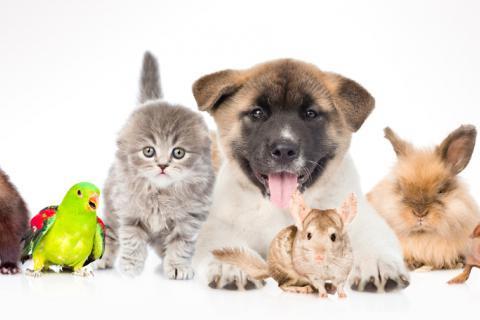 7.625 mascotas han sido vacunadas en lo corrido del año en Ibagué -Tolima