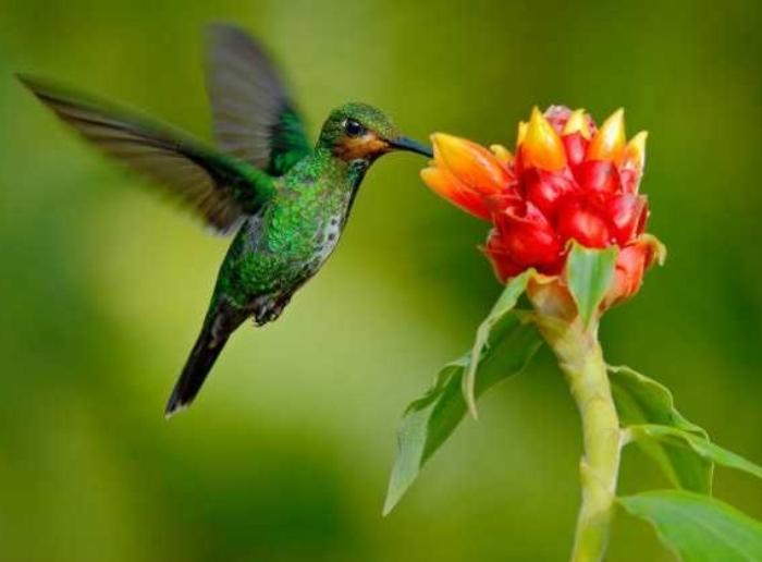 El V Festival de Aves del Tolima es un paraíso en avifauna