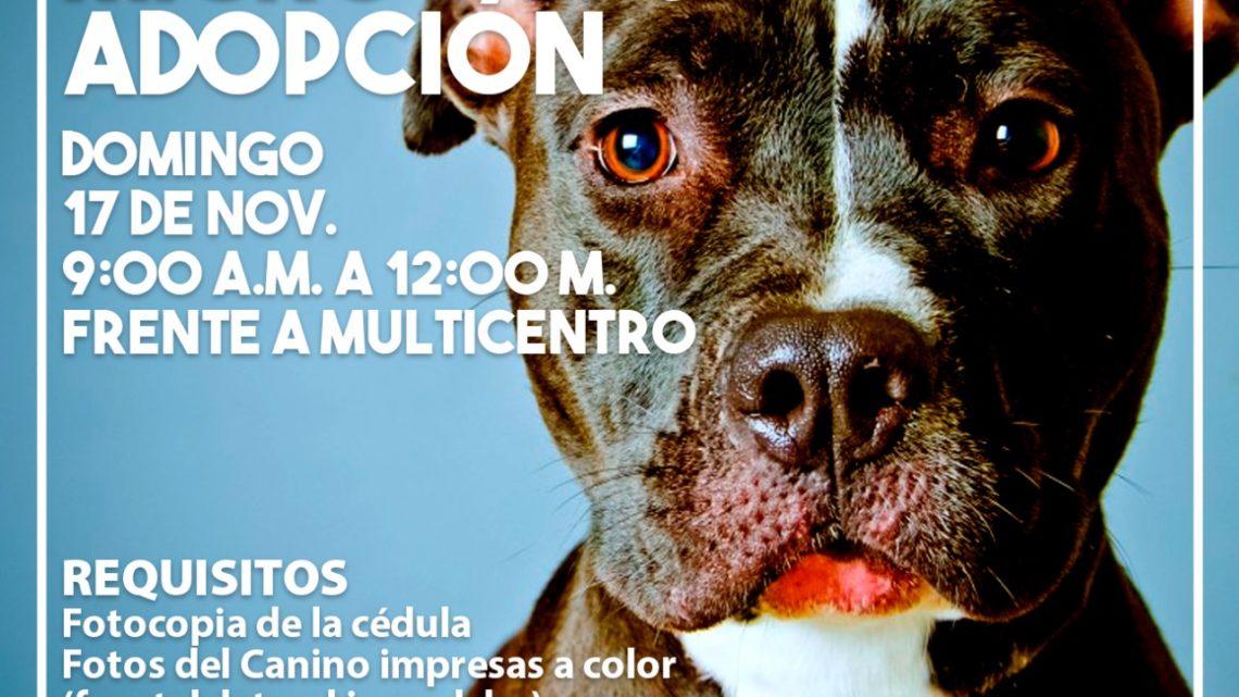 Domingo 17 nov  jornada de adopción de mascotas e instalación de microchips