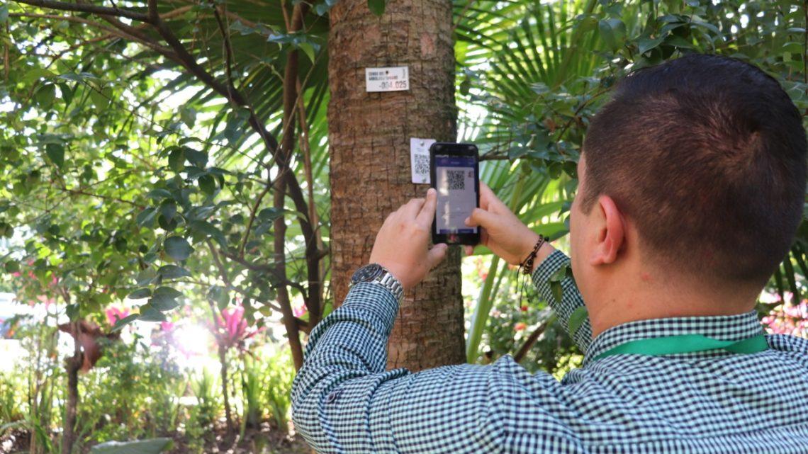 Información ambiental de los árboles de la ciudad Ibaguè