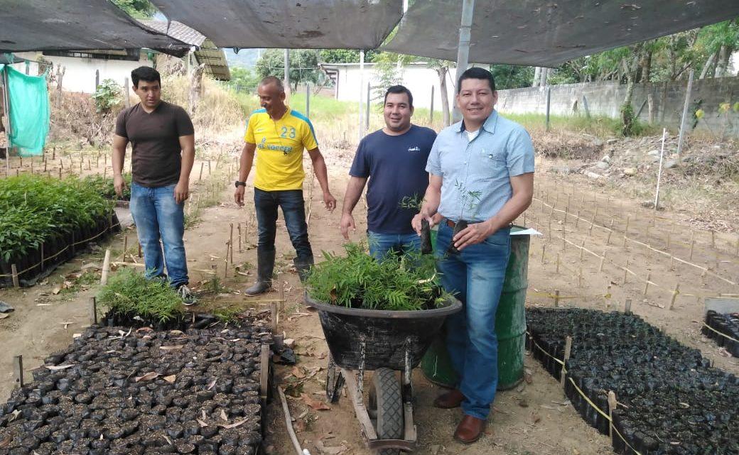 Sembrar un millón de árboles en el Tolima