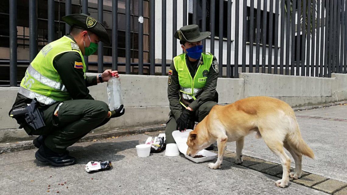 Policía Metropolitana de Ibague…Cuida sus peludos.