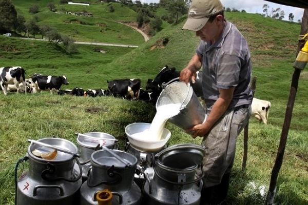 Productores de leche del Tolima tienen aliado estratégico para vender en medio de la emergencia