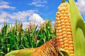 Ayudar a los bancos y al sector financiero para productores agropecuarios afectados por la emergencia del covid-19