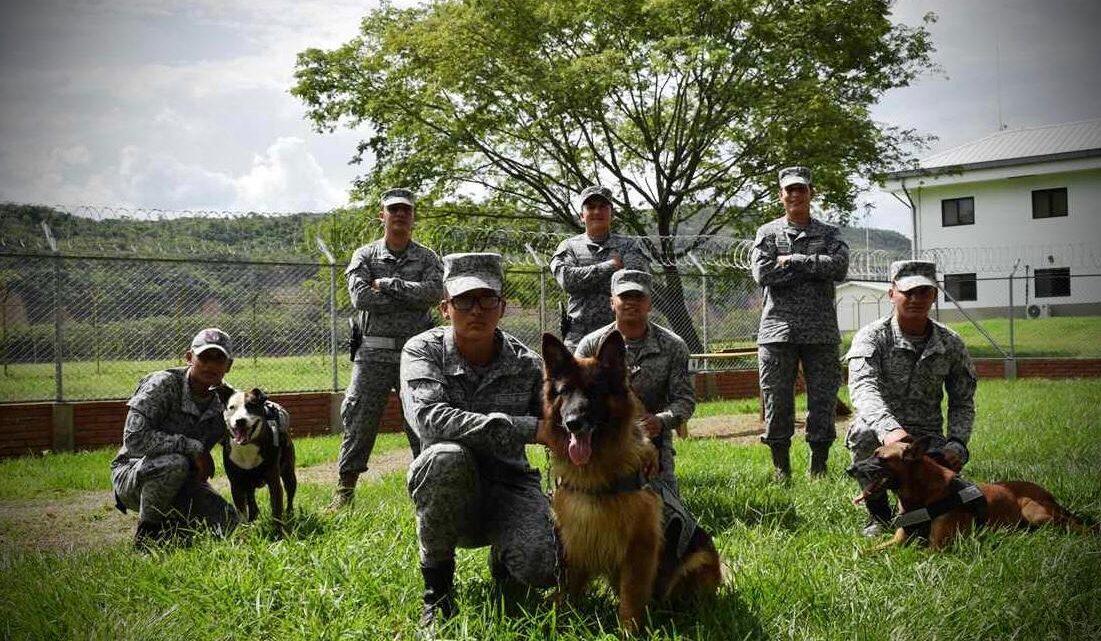 Obediente y noble, así es Shaira, canino de su Fuerza Aérea Colombiana