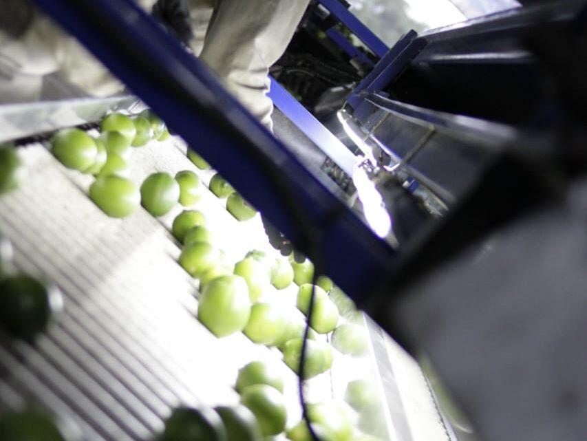 Tolima tiene jornada de prevención y control con productores de cítricos