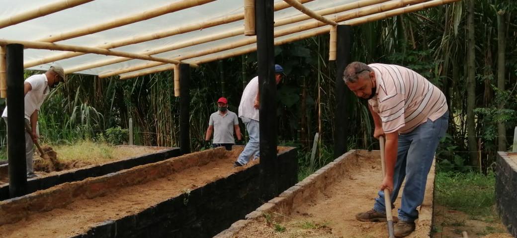Comité de Cafeteros entregarán  150.000 plántulas a productores café en Ibaguè