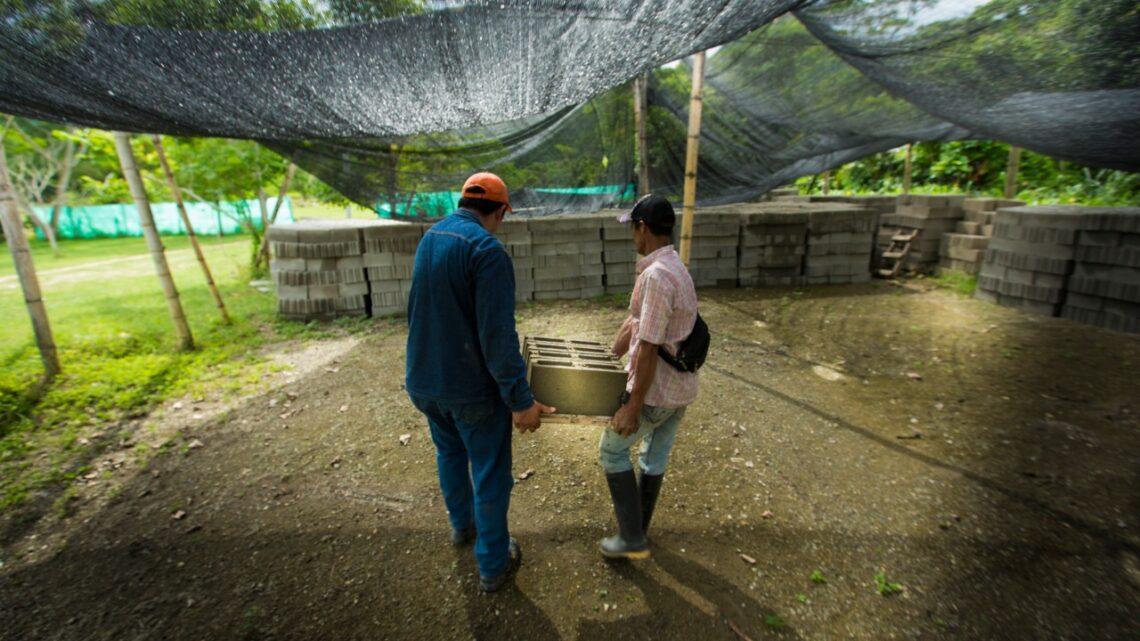 Maestros de obra del Tolima beneficiados por 'Conéctate Maestro' de Cemex