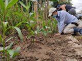 Turistas: Ibagué inicia recuperación de zonas verdes en Ancón Tesorito
