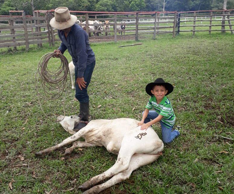 Paz de Ariporo, pueblo autentico llanero en Casanare.