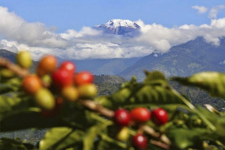 """""""Con la llegada del Tolima a la RAP Eje Cafetero nos consolidamos como la primera región productora de café en Colombia"""""""