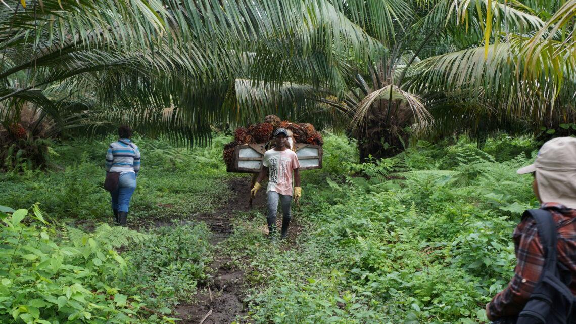 100 productores de palma de aceite implementan un modelo de transformación productiva