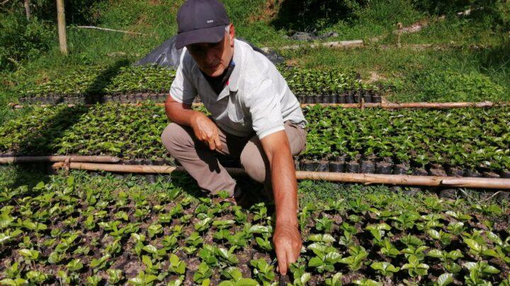 Turistas: Ibaguè  fortalecer el sector cafetero